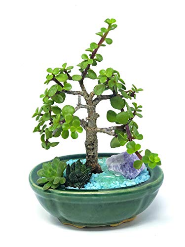 Creations by Nathalie -Mini Jade Bonsai Succulent Garden with Ceramic Base, Decorative Rocks, Crystal — Customizable