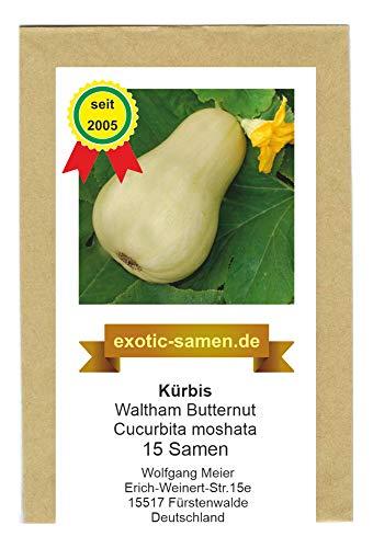 Speisekürbis - Waltham Butternut - 15 Samen