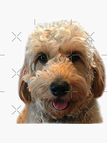 Goldendoodle Puppy Dog - Golden Doodle Sticker - Sticker Graphic -Stickers for Hydroflask Water Bottles Laptop Computer Skateboard, Waterproof Decal Stickers