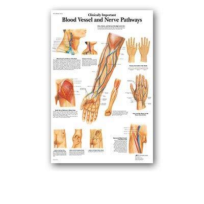 shiyueNB Diagrama de Cuerpo de Manos y pies Sistema Muscular de anatomía Humana Impresión de póster Pintura Arte Imagen de Pared Decoración del hogar para educación médica 50x70cmNoFrame 100