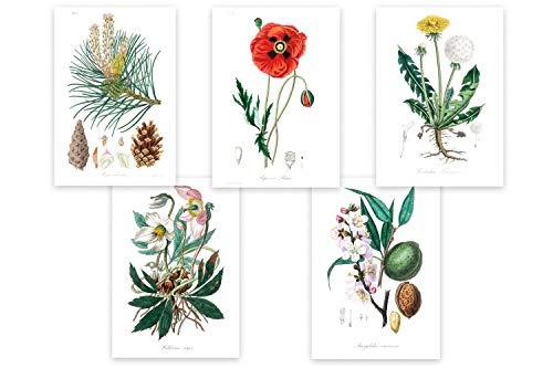 Wolfenthal Botanik Poster Set (Vintage) «Medical Botany» 5 x DIN A4 historische Illustrationen aus der Botanik/Biologie