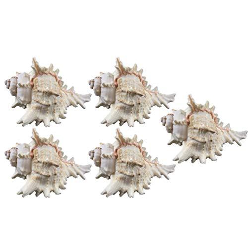 LIOOBO Muschel Muscheln natürliche Aquarium Ornament Aquarium Zubehör Ozean Strand Muschel Muscheln für Hochzeit Dekor Strand Thema Party DIY Handwerk und Muschel Sammler