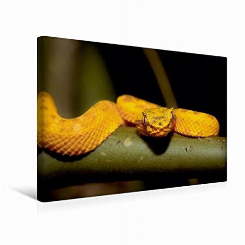 CALVENDO Premium Textil-Leinwand 45 cm x 30 cm quer, Greifschwanz-Lanzenotter (Bothriechis schlegelii) | Wandbild, Bild auf Keilrahmen, Fertigbild auf echter Costa Rica tierisch gut Tiere Tiere