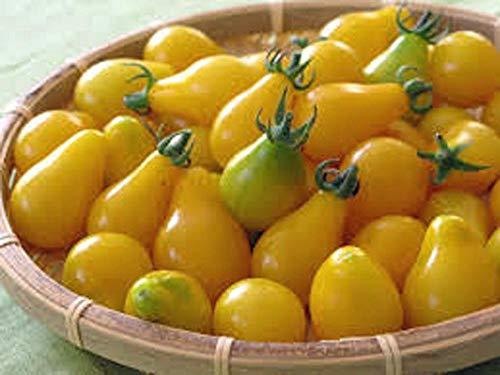 vegherb Tomato,Yellow Pear Tomato Seed, Heirloom, Organic, Non-Gmo, 500+ Seeds, Tasty