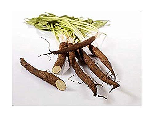 Schwarzwurzel Russischer Riese - Scorzonera hispanica - 50 Samen
