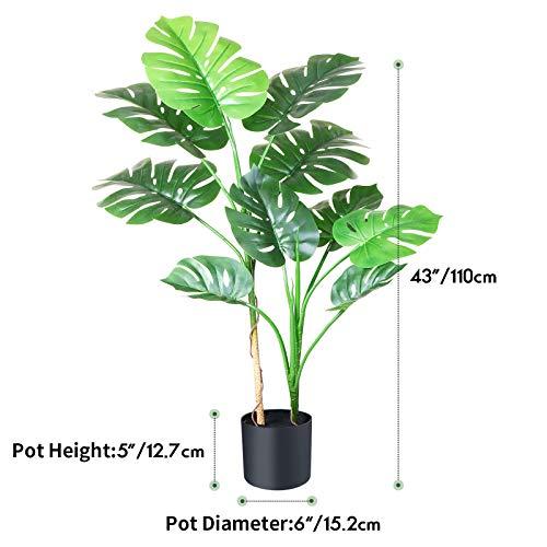 Fopamtri Plantas