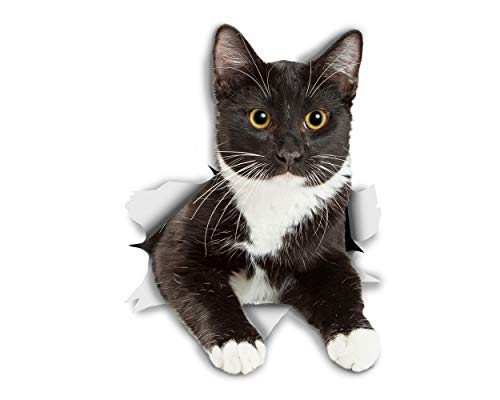 Winston & Bear 3D Aufkleber - 2er-Pack Katze - ruhen Smoking Kitty Aufkleber für Wand, Kühlschrank und schwarz Tuxedo Katze Aufkleber