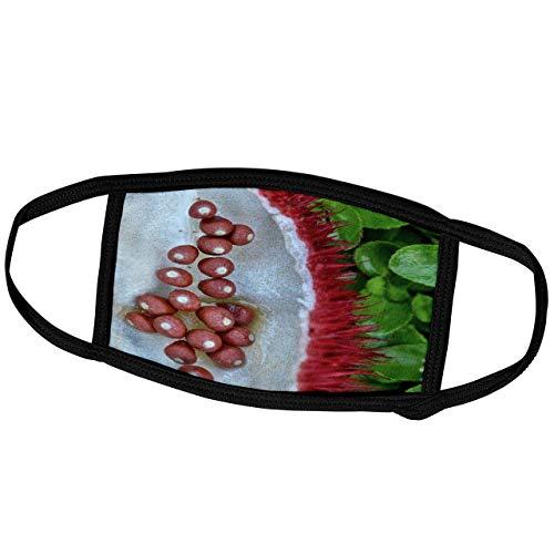 Kike Calvo Gesundes Leben und Küchenfrucht Kapseln und Samen von Achiote oder Annatto (Bixa orellana) -Face Masken