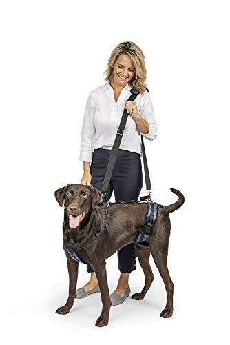 Harness for Lifting Dogs