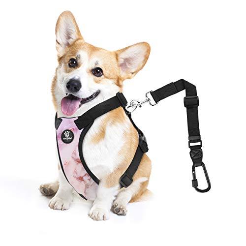 VavoPaw Cinturón de Seguridad de Coche de Perro, Talla S Arnés de ...