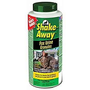 How to Get Rid of Squirrels: Most Effective Ways [UPDATED