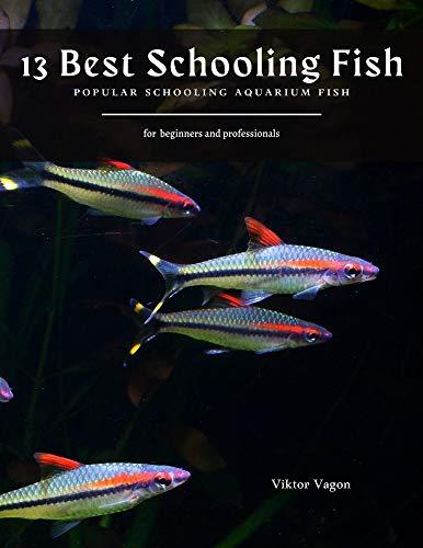 13 Best Schooling Fish: Popular Schooling Aquarium Fish