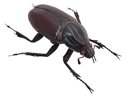 Goliathkäfer braun-schwarz - Dekomagnet, Käfermagnet, Sammelmagnet, Kühlschrankmagnet, Insektenmagnet, Geburtstagsgeschenk, Geschenkidee, weihnachtsgeschenk