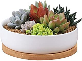 Best potted plant delivery Reviews