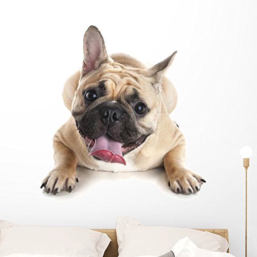 Wallmonkeys French Bulldog White Wall Decal Peel and Stick Graphic (36 in H x 27 in W) WM359392