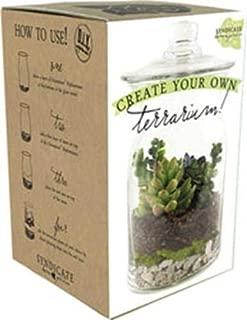 Syndicate Sales DIY Terrarium Kit