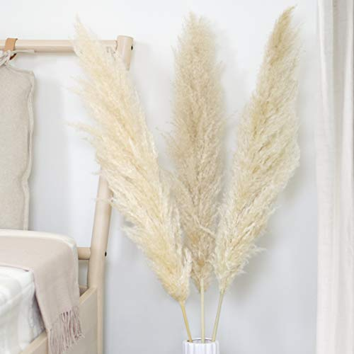 WTS Natural Dried Pampas Grass Decor - 3 Beige Stems (48'' Tall) - Tall Stemmed Real Pampas Grass Large Size for Wedding Arrangements or Boho Flower Decor