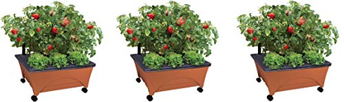 Emsco Group City Picker Raised Bed Grow Box – Self Watering and Improved Aeration – Mobile Unit with Casters (Pack of 3)