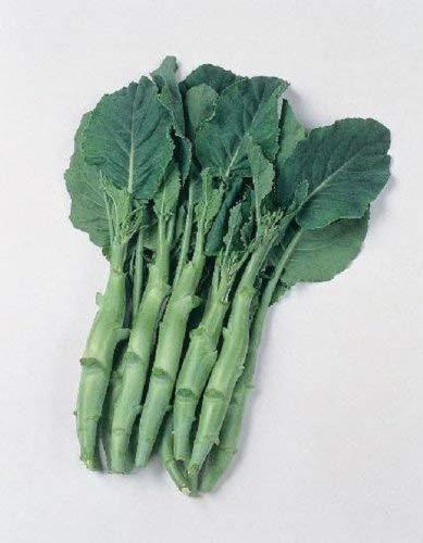 Seekay China Kale - Kailaan - Approx 200 Semillas - Vegetal