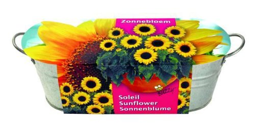 Mini-Küchengarten. Sonnenblume: Zink-Blumenkasten (10 cm hoch, 30 cm lang) mit Saatmischung, Pflanzenerde und Pflegeanleitung