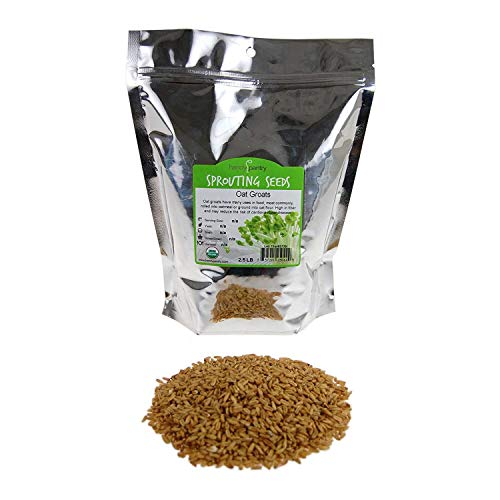 Organic Hulled Oat Groats Hull Removed: 2 Lbs  NonGMO Oats  Cereal Grain  Emergency Food Storage Grains Rolling for Oatmeal amp More