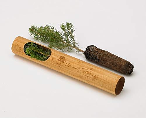 Memory-Gift-Tree-Spruce