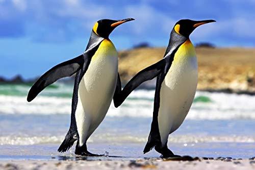 Douwert Póster de Pintura en Lienzo, Pareja de pingüinos Emperador, para decoración de Pared, decoración de habitación, decoración del hogar, sin Marco 60x90cm