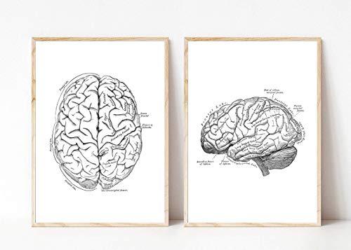 Kunstdruck Din A4 ohne Rahmen 2-teilig - Gehirn Gehirnhälften Mensch Anatomie Zeichnung Retro Medizin Arzt Neurologie Poster Bild