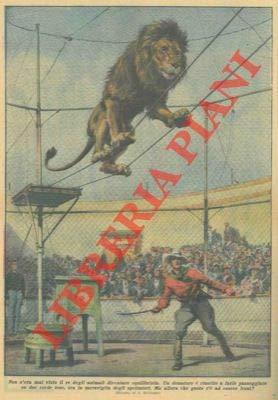 Un domatore e riuscito a fare passeggiare un leone su due corde tese.