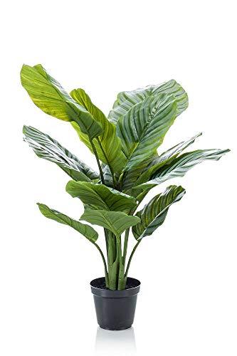 artplants.de Calathea orbifolia de plástico ARUA, Verde, 60cm - Calatea sintética - Planta Tropical Artificial