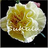 16色がありますカーネーションの種多年生の花鉢植え庭の植物Caryophyllusフラワーシード、10個10