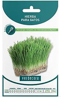 Amazon.es: Verdecora: Jardín