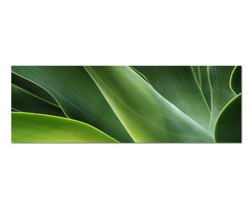 Paul Sinus Art Panorama Bild 150x50cm (Natur Grün Pflanzen Blatt) Exklusives Fotowandbild auf Leinwand und Keilrahmen Leinwandbild Fotodruck modern Zeitlos Stilvoll wie EIN...