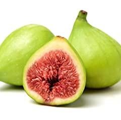 You will be receiving 1 plant between 3 & 8 inches in a 3 inch deep pot. Growing your own fruit results in better tasting and better for you delights! This is a nice fig tree that grows well in a pot or smaller yards as it has a dwarf habit.