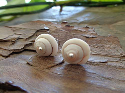 SHIVA AUGE MUSCHEL PUNKT STECKER kleine, einmalige Ohrringe aus echten Muscheln