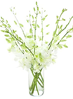 Fresh Cut Flowers - Dendrobium Orchids White with Vase from Eflowerwholesale