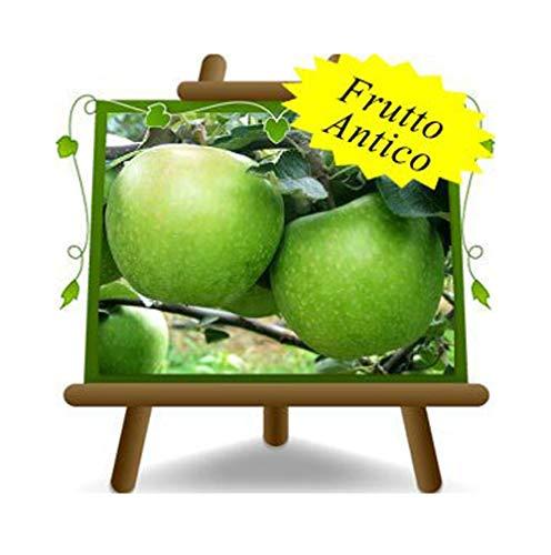 Apfelbaum Äpfel Früchte - Granny Smith - Obstpflanzen antik auf Blumentopf einer Vase von 20 - Baum max 170 cm – 2Jahre Anbau Italien