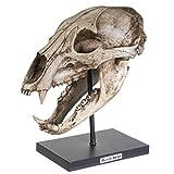SUMMIT COLLECTION ポリストーン 樹脂 黒熊 スカル レプリカ モデルオンスタンド ネームプラーク ホームインテリア インテリアデザイン 彫刻 幅10.75インチ