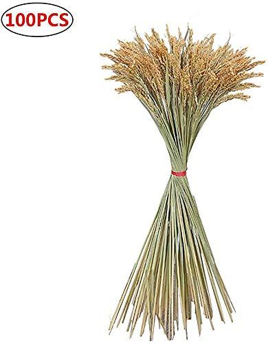LV two 100pcs secas Naturales espigas de arroz, espigas de arroz y Flores secas, Plantas Idílico, oídos Naturales del Color primario de arroz, Ventana Decoración y Paisajismo,B