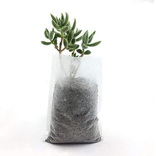 Asdomo Lot de 300 sacs de semis non tissés - Blanc - Biodégradables - Sac de plantation en tissu non tissé - Sac d'élevage pour semis - 20 x 35 cm