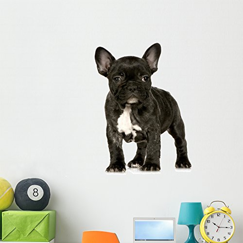 Wallmonkeys French Bulldog Puppy Wall Decal Peel and Stick Graphic (48 in H x 48 in W) WM207152