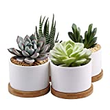 ZOUTOG Succulent Planter, White Mini 3.15 inch Ceramic Flower Planter Pot with Bamboo Tray, Pack of 4 - Plants Not Included