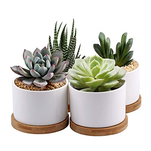 Succulent Planter, ZOUTOG White Mini 3.15 inch Ceramic Flower Planter Pot with Bamboo Tray, Pack of 4 - Plants Not Included