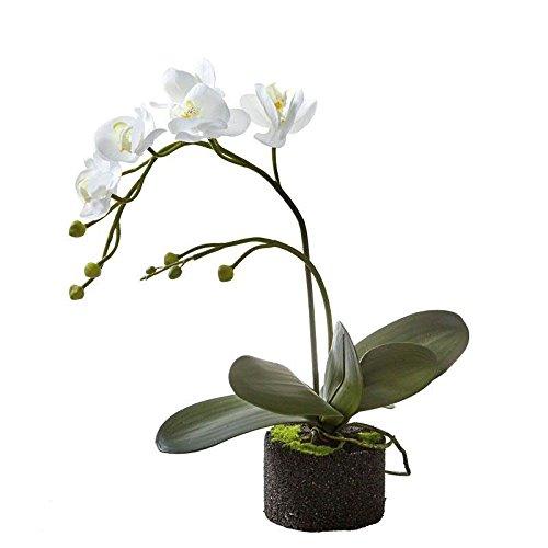 Künstliche Orchidee mit Ballen - Hochwertig & Naturgetreu - Höhe: 50cm - Weiße Blüten - Phalaenopsis/Dekoorchidee - Deko Zimmerpflanze/Kunstpflanze