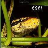 2021: Monthly Photo Calendar   January 2021 - December 2021   Monthly Calendar with U.S./UK/ Canadian/Christian/Jewish/Muslim Holidays   Snake Calendar