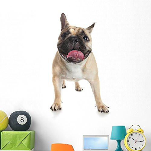 Wallmonkeys French Bulldog White Wall Decal Peel and Stick Graphic (48 in H x 34 in W) WM359393