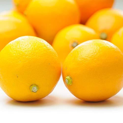 国産 レモン 1kg 佐賀県産 防腐剤不使用 特別栽培農産物 ご家庭用 訳あり