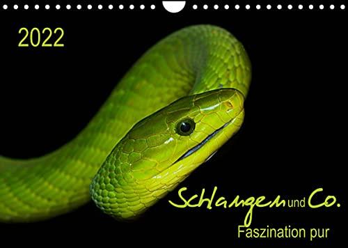Schlangen und Co. - Faszination pur (Wandkalender 2022 DIN A4 quer)