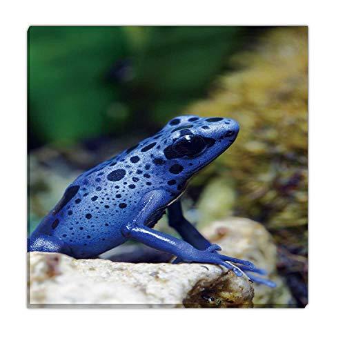 Hitecera Blue Poison Dart Frog,Wall Art Decals Wall Art for Kitchen 12''x12''
