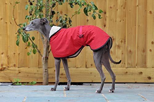 Abrigo impermeable con forro polar mate, color rojo y burdeos, con correa de clip ajustable a juego, galgo italiano, sighthound (14 pulgadas)